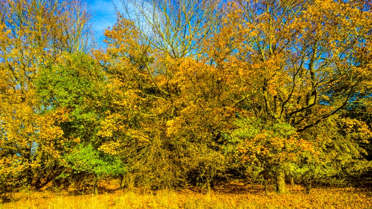 goldener-herbst-wp_20161030_13_49_56_raw__highres-1600